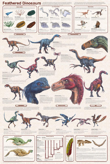 http://www.dinosaur-world.com/feathered_dinosaurs/other_Images/feathered_dinosaurs2.jpg